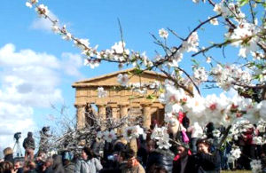 Blossoming almond tree in front of the Temple of Concordia, Agrigento - image via urbanpost.it