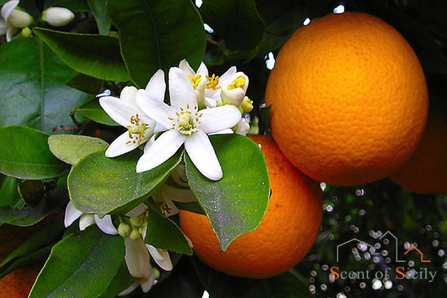 Tipical Sicilian Fruits