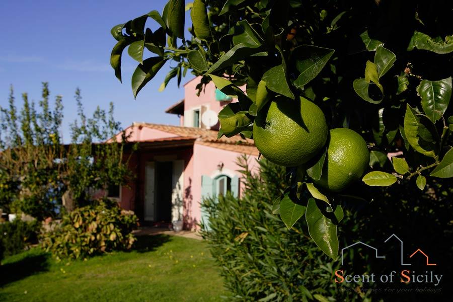 Villa Sunrise Fruit in the garden
