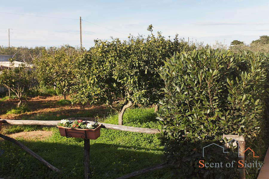 Villa Gio- the trees in the garden