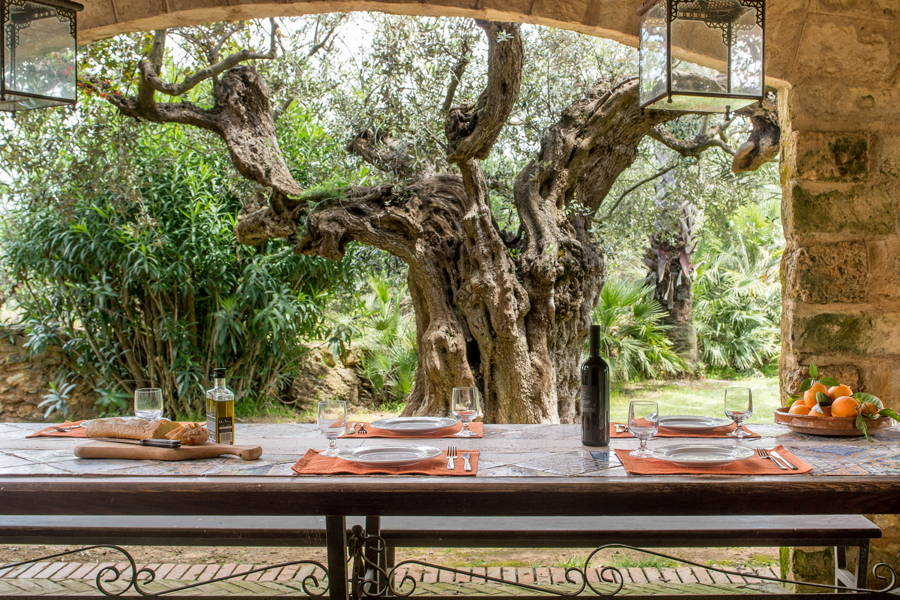 View of tipical Sicilian Olive Trees