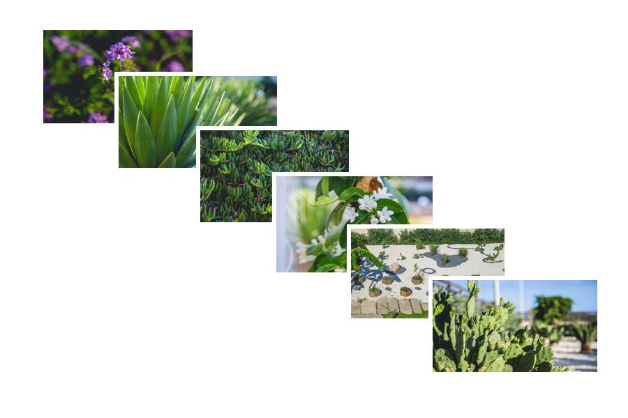 Tipical sicilian green