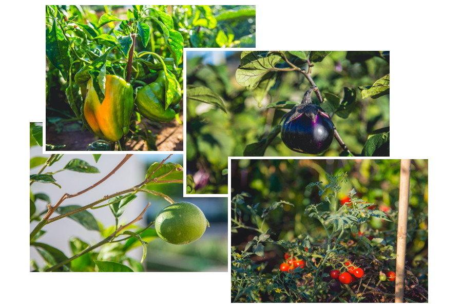Tipical sicilian vegetadbles