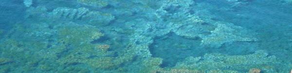 Ustica Natural Reserve