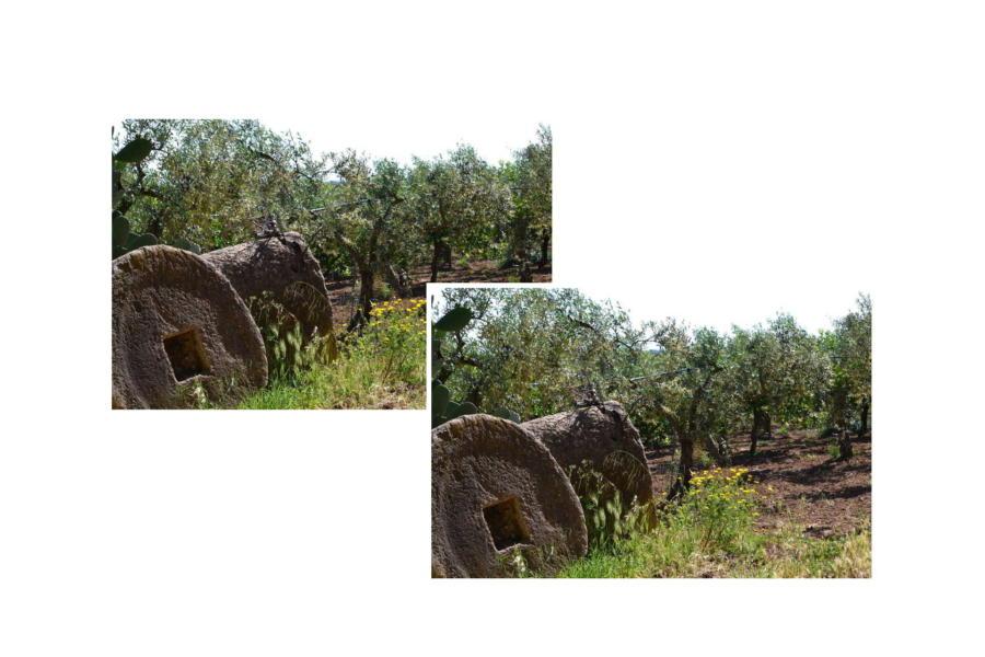 Olive trees surround Villa Bouganville Castelvetrano Scent of Sicily