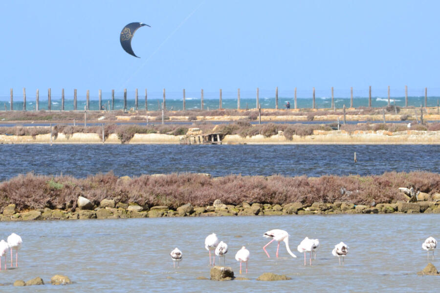 Kite-and-Flamingos-Marsala-Western-Sicily