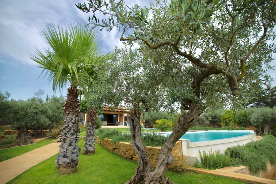 Welcome to Villa Olive Trees
