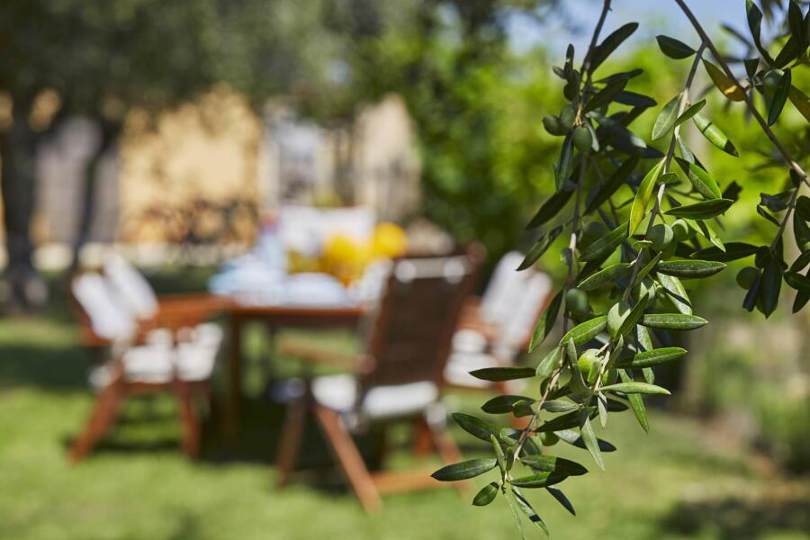 Dinning in the garden