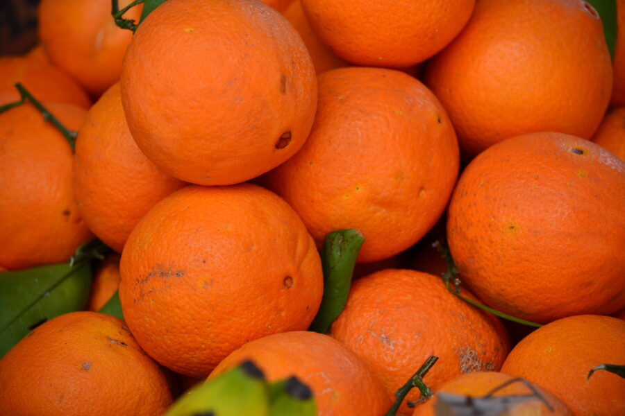 Sicily, the large expanses of citrus fruit in the area